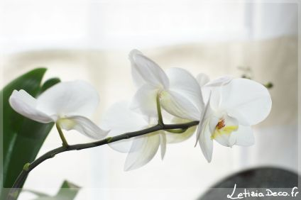 Orchidée photo